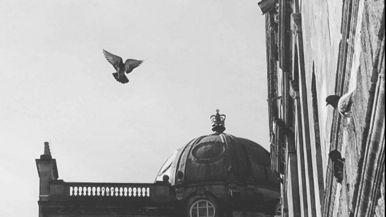 Pigeon flying - student project