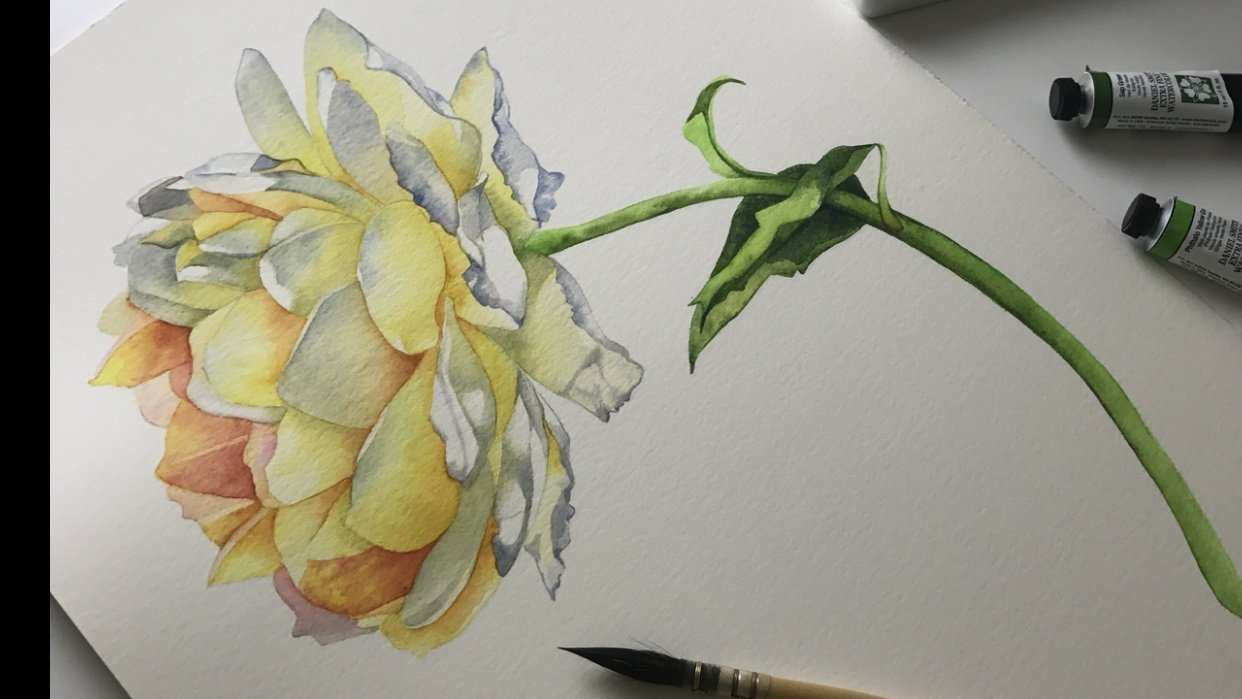Yellow Rose - student project