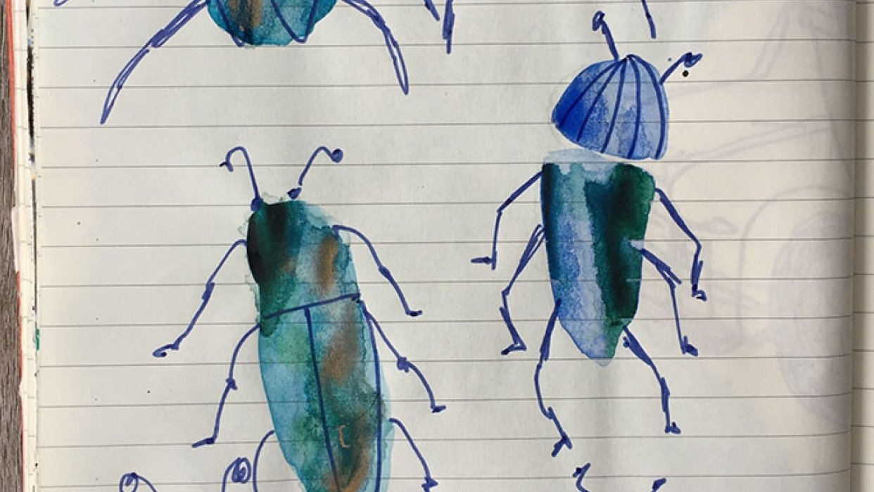 Beetles and butterflies - student project