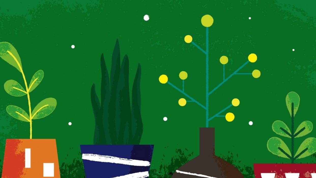 Plants - student project