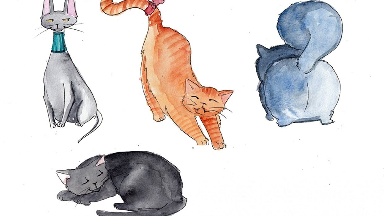 My cute cats - student project