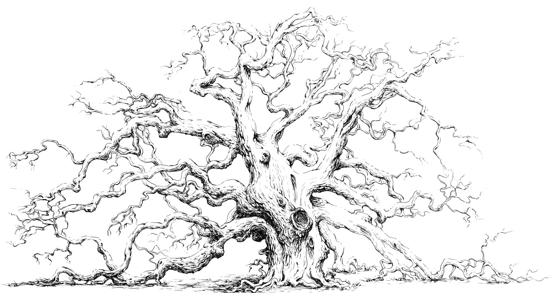 Dont worry its not another how to draw boring trees course
