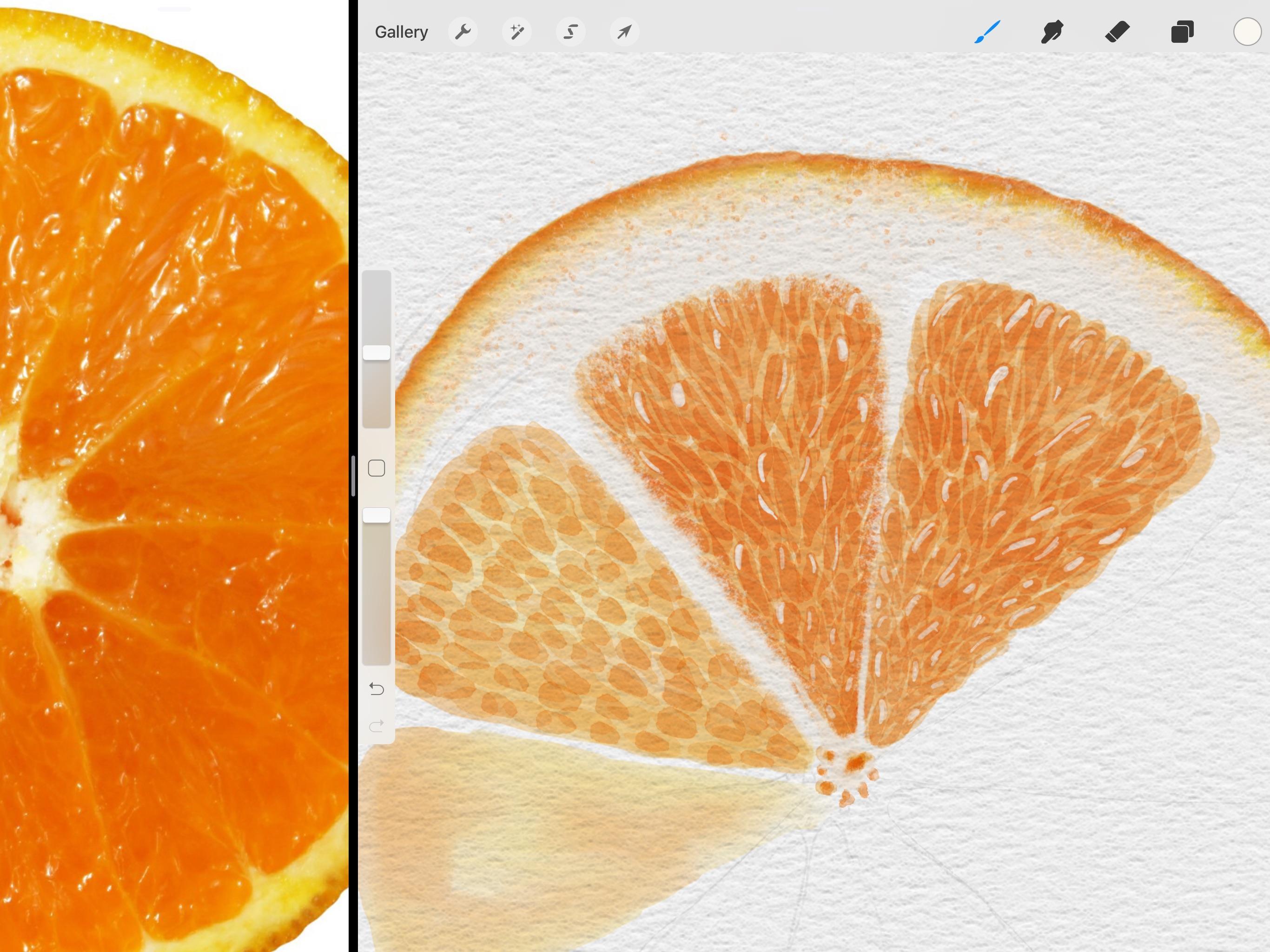 Watercolor Ilrations In Procreate 5