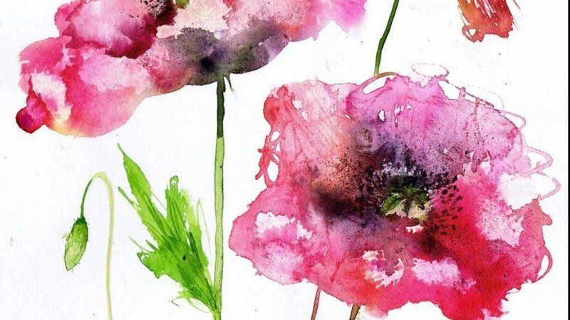 vibrant loose wet on wet watercolour poppies