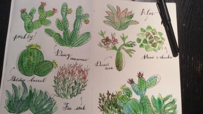Very cute cactus