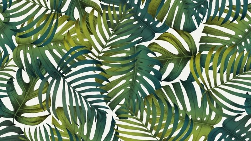 Tropical Jungle Patterns