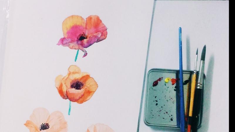 Poppy September