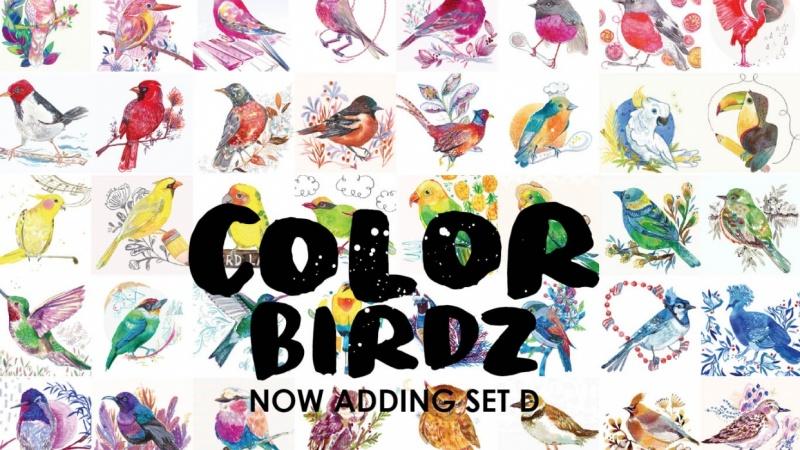 More Color Birdz