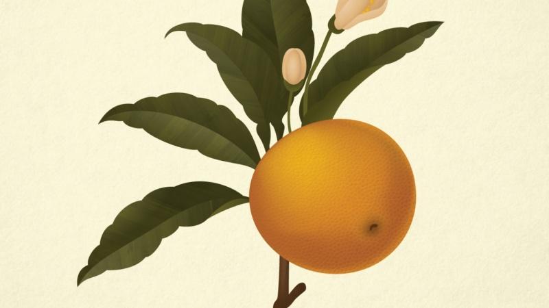 Botanical Orange Study