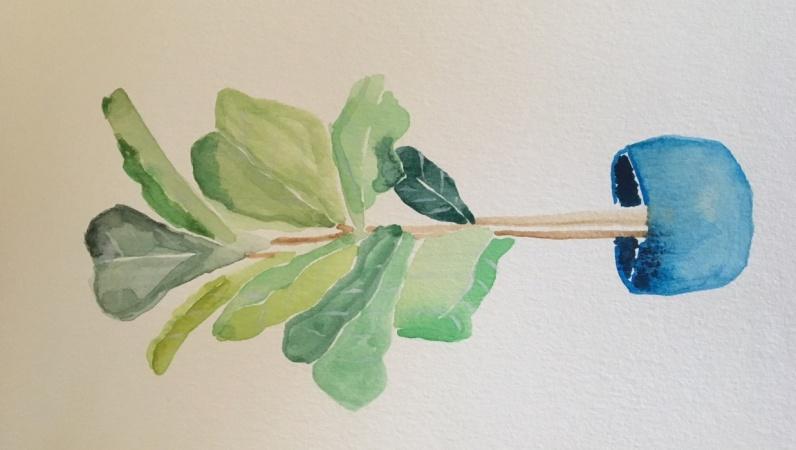 Fiddleleaf Fig Plant