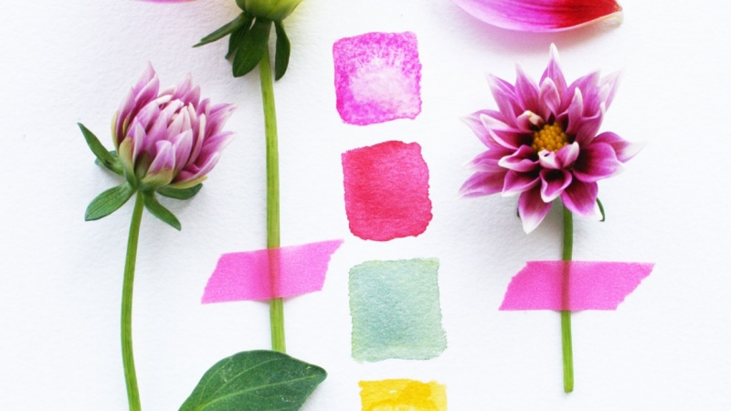 Color Palette Inspiration from the Dahlia Flower