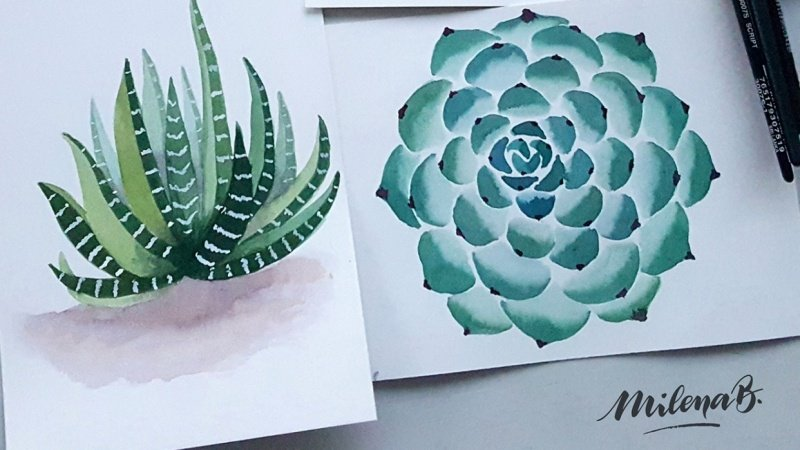 Lovely cacti & succulents