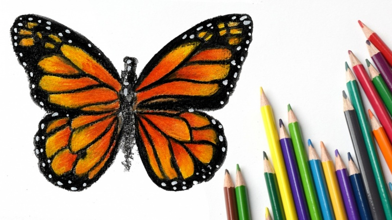 Watercolor pencils - butterfly