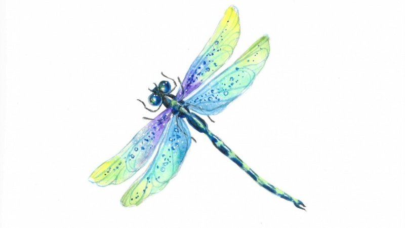 Watercolor Dragonfly