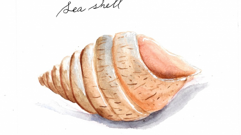 Sea Shell - Summer
