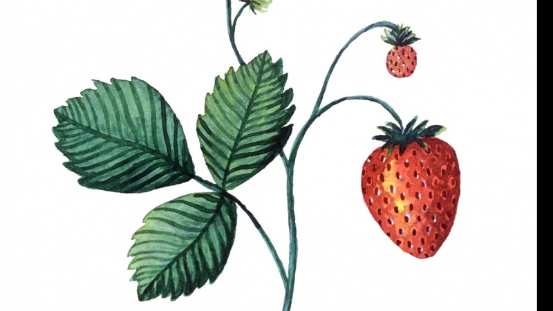 Strawberry Thank You Card
