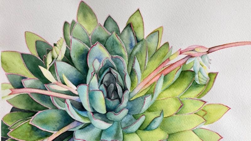 Succulent - Louise de Masi tutorial