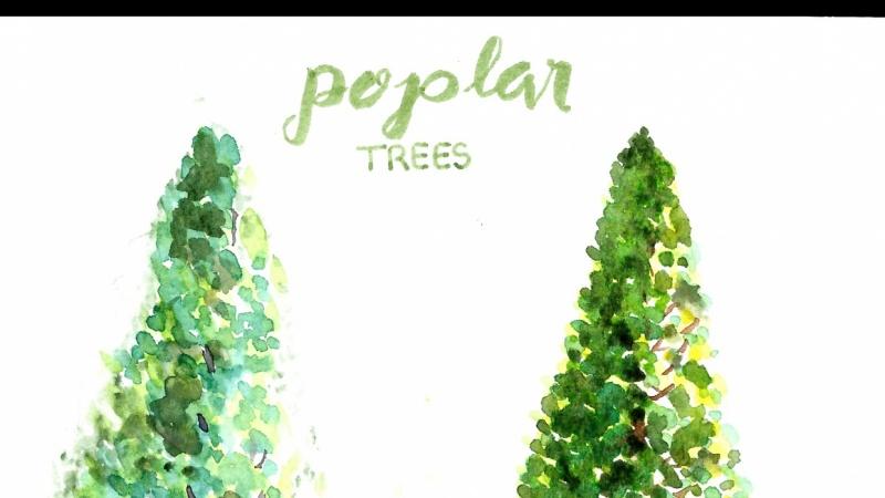 Poplar Treet