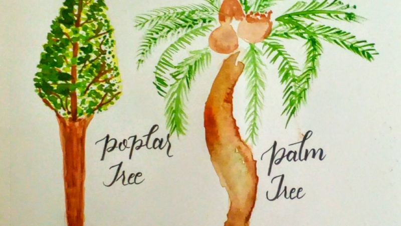 Watercolor Painting: Different types of Trees