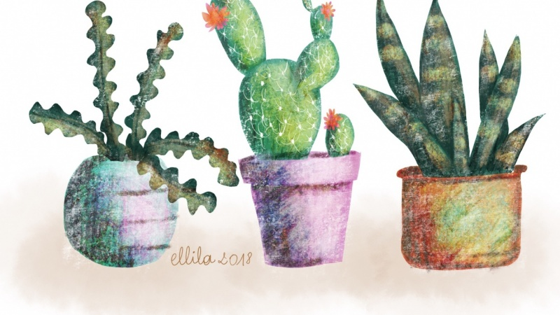 Cacti in a pot