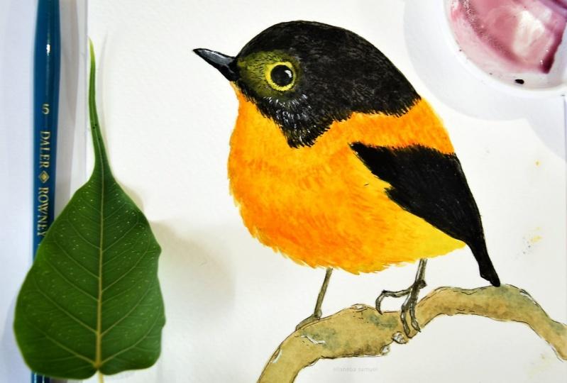 Watercolor birds - Black & Orange Flycatcher