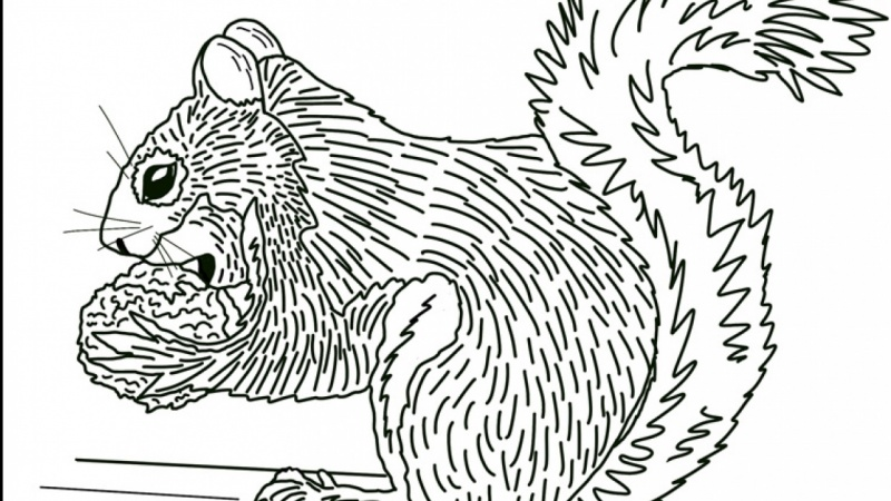 Design an Adult Coloring Book Page on Your iPad in ...