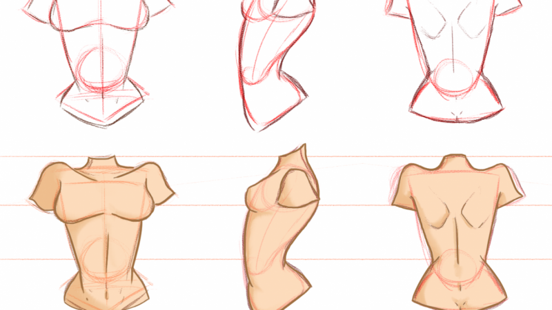 Female torso practice: front, side and back views