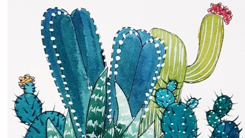 Ink and watercolour Cacti