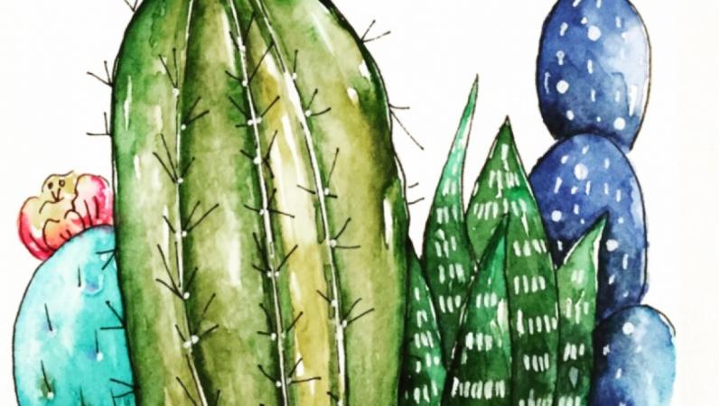 Cacti Illustration