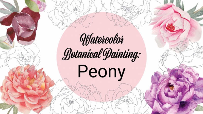 Watercolor Botanical Painting: Peony - Project