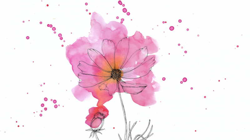 Modern Ink and Watercolor Floral: Cosmos!