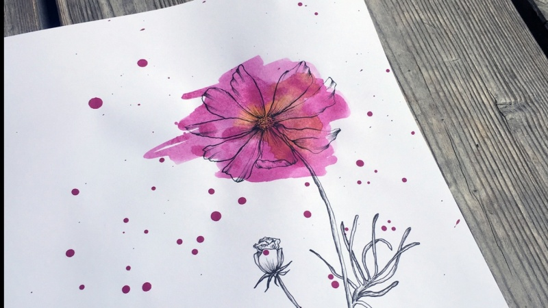 Watercolor Cosmos