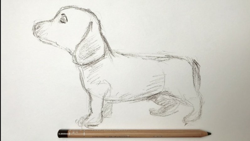 Dog 3 minute sketch