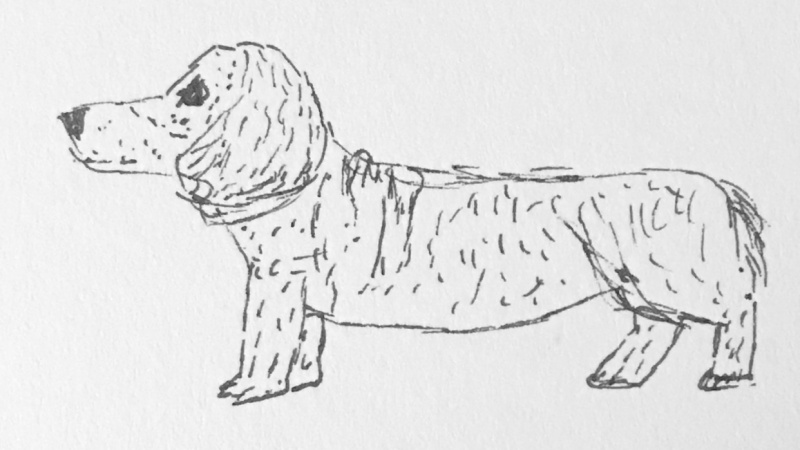Speedy dog