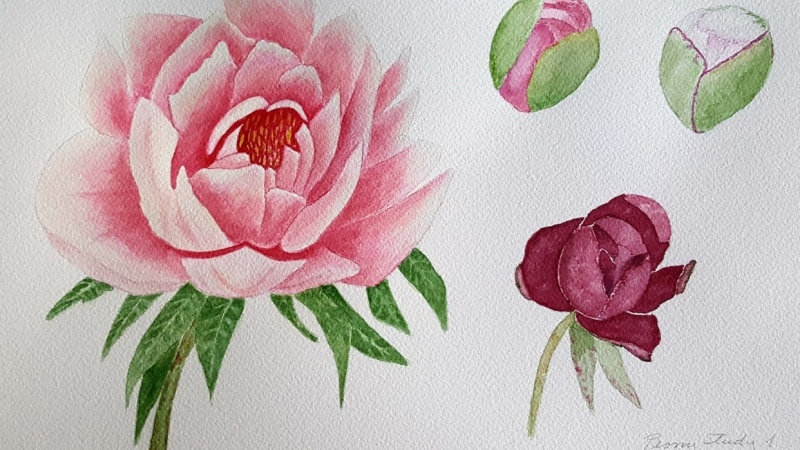 Purple, Coral and Pink Peonies
