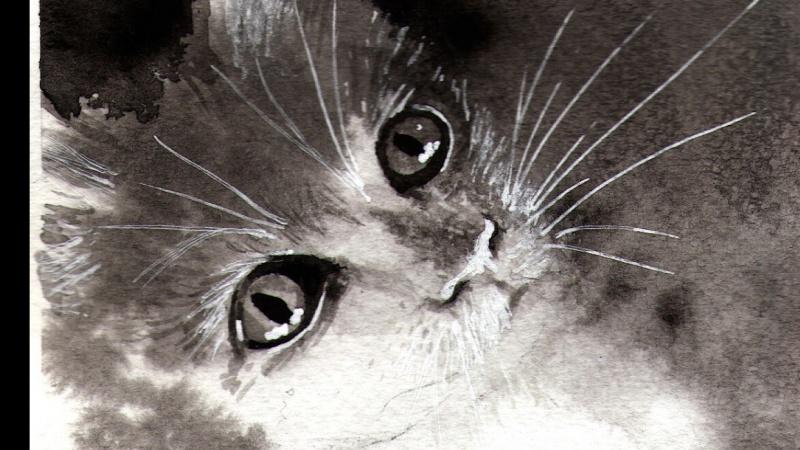Monochrome cats