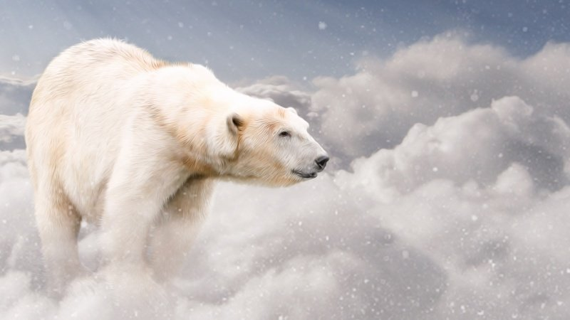 Bear in the Clouds