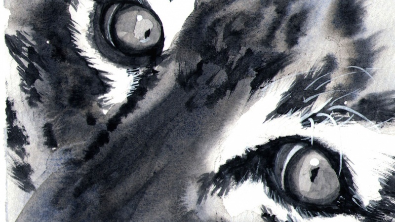 My monochrome animal eyes