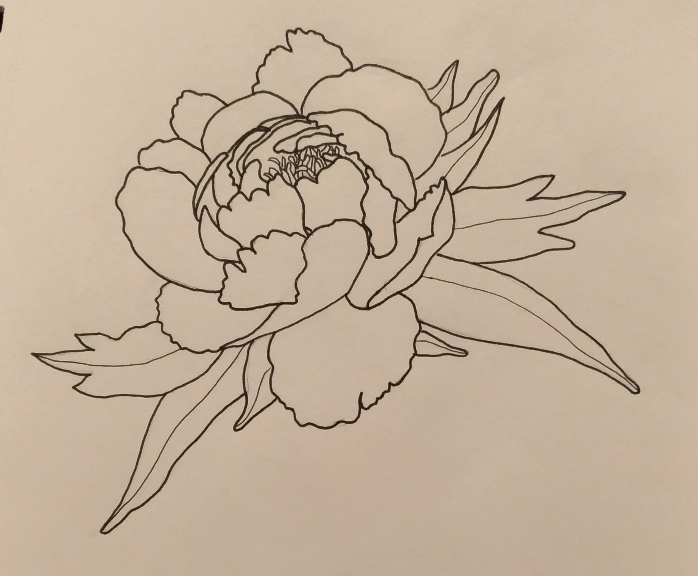Peony Drawing Skillshare Projects