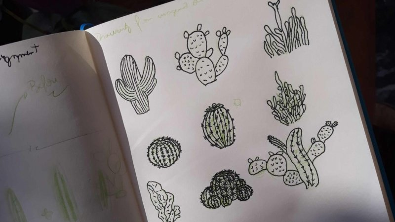 A cactus experience