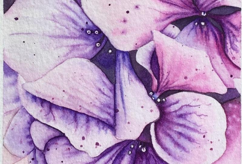 My Hydrangea