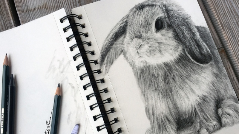 Fur styles and the fluffy fur of a rabbit