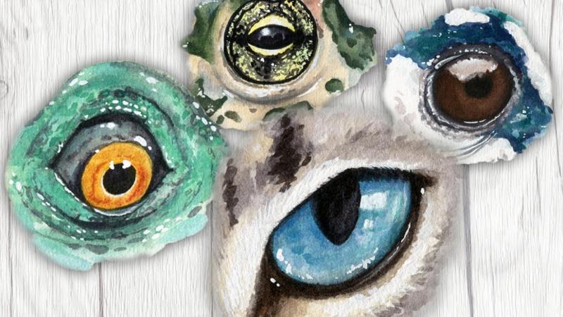 My Animal Eyes