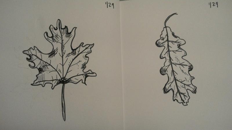 Oak & Maple Leaves