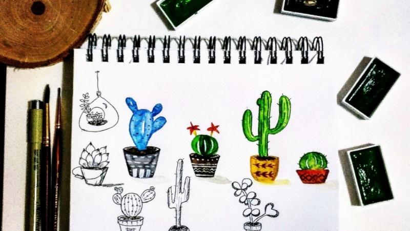 My cacti garden