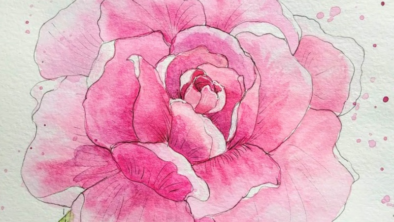Ink and watercolor rose