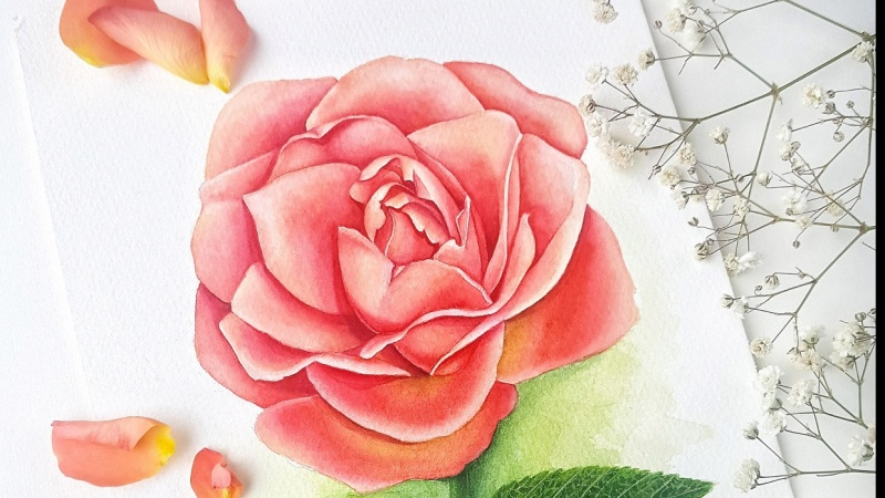 Three styles of Watercolour Roses
