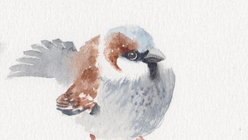 Sparrow and garden songbirds