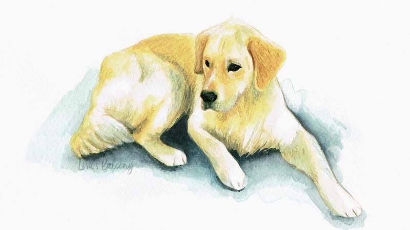 Dog Illustration - Balú