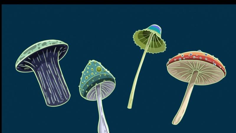 Mushroom Prompts